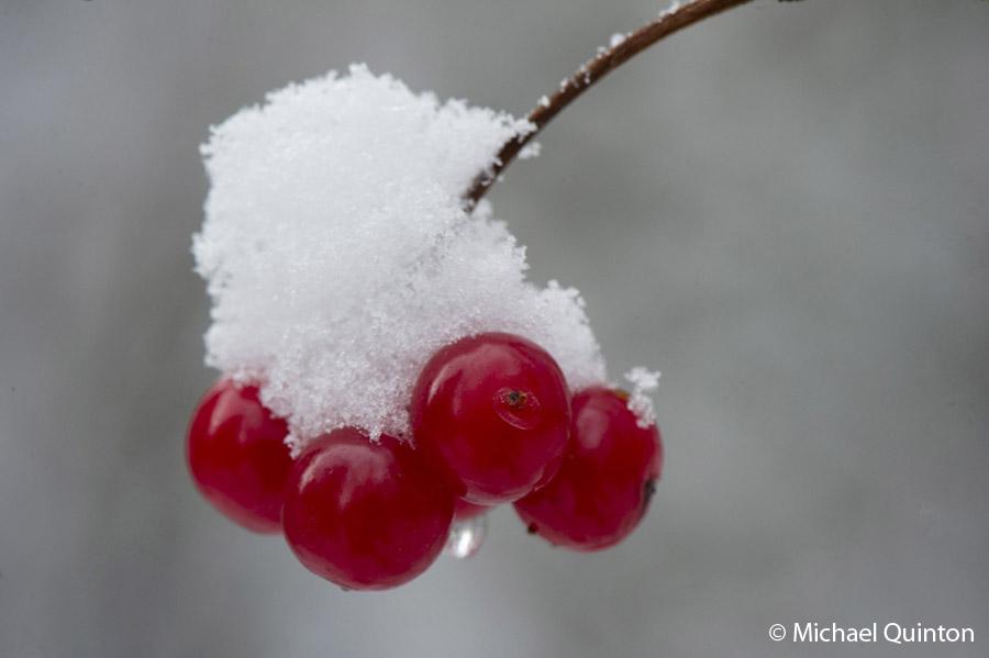 hb cranberry-13-22